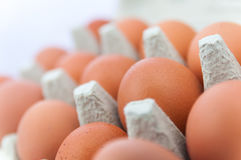 Fresh hens eggs. In their protective carton Royalty Free Stock Images