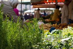 Fresh herb. Choice of fresh herb at veg stall Stock Image