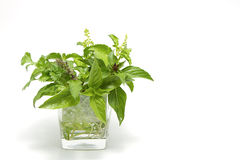 Fresh herb in cup Stock Photo