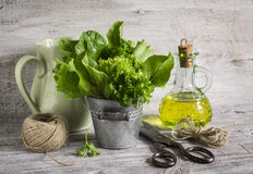 Fresh herb garden in a metal bucket, olive oil in glass bottle, old vintage scissors and a jug Royalty Free Stock Images