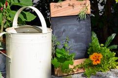 Fresh herb garden table Stock Photo