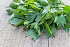 Fresh herb from lovage Stock Image