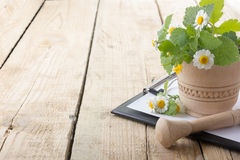 Fresh herb, medical clipboard on wooden table. Alternative medicine concept. Royalty Free Stock Photo