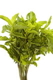 Fresh herb mint. Bunch of fresh herb mint Royalty Free Stock Photo