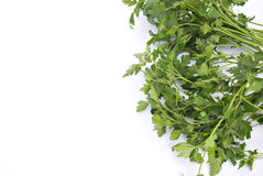 Fresh Herb: Parsley Royalty Free Stock Photos