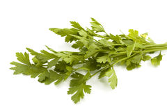 Fresh herb parsley. Fresh bunch of parsley isolated on white stock image