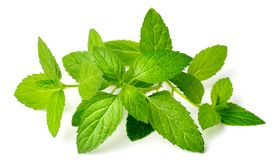 Fresh herb, fresh peppermint isolated on white. Background royalty free stock images