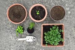 Fresh herb plants Royalty Free Stock Photos