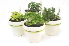 Fresh herb pots Stock Photography
