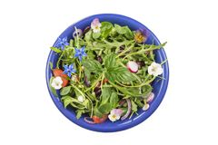 Fresh herb salad with leafy greens and nasturtium flowers served in a blue ceramic bowl on white Stock Photo