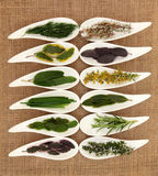 Fresh Herb Selection. Of varieties of sage, thyme, fennel, chives, mint, rosemary and bay leaf sprigs in white porcelain dishes over hessian background stock photos