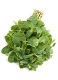 Fresh herb spearmint Stock Image