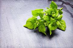 Fresh herb (spinach) over black  wooden background Stock Photos