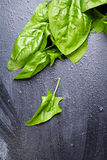 Fresh herb (spinach) over black  wooden background Royalty Free Stock Photo