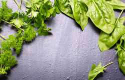 Fresh herb (spinach, parsley) over black  wooden background Stock Images
