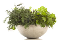 Fresh herbage Stock Photography