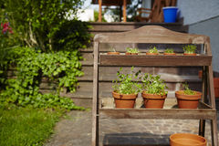 Fresh herbage in pots. Grown in the garden Stock Photography