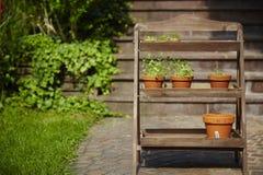 Fresh herbage in pots. Grown in the garden Stock Image