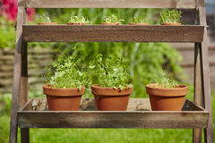 Fresh herbage in pots Stock Photos