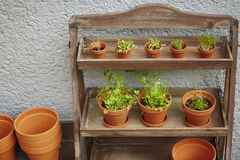 Fresh herbage in pots. Grown in the garden Royalty Free Stock Photography
