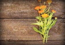 Fresh  herbal calendula flowers Royalty Free Stock Image