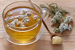 Fresh herbal tea Royalty Free Stock Image
