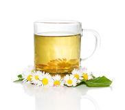 Fresh herbal tea with Bellis prennis Royalty Free Stock Photo