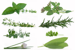 Fresh Herbs. Mint, oregano, thyme, rosemary, cilantro, parsley, chives and sage isolated against a white background stock images