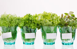 Fresh herbs. In the glass stock photos