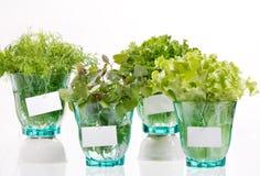 Fresh herbs Royalty Free Stock Photo