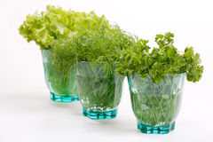 Fresh herbs. In the glass royalty free stock image