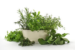Fresh herbs. Assorted fresh and various herbs on white Royalty Free Stock Photo