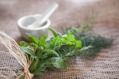 Fresh herbs. Tied to a bundle on burlap with a mortar & pertle in the background. Very shallow DOF, front spearmint leaves are the focus point Stock Images