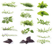 Fresh herbs. Various fresh herbs isolated on white. Tarragon (Artemisia dracunculus), Peppermint (mint) (Mentha piperita), Dill (Anethum Graveolens), Oregano ( royalty free stock photos