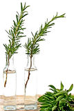 Fresh herbs. Like rosemary and basil Royalty Free Stock Photo
