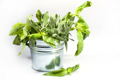 Free Fresh Herbs Royalty Free Stock Photos - 18335858