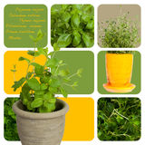 Fresh herbs. Assortment of herbs and aromas for prepare tasty food royalty free stock photos