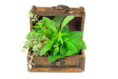 Fresh Herbs. In a treasure box Stock Photo