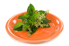 Fresh Herbs. Fresh, spicy Herbs on a plate Royalty Free Stock Photography