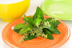 Fresh Herbs. On a plate Royalty Free Stock Images