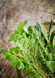 Fresh herbs Royalty Free Stock Image