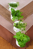 Fresh herbs. Royalty Free Stock Photos
