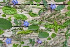 Fresh herbs stock photography