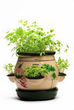 Fresh herbs. Assortment of fresh herbs, parsley, basil royalty free stock images