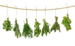 Fresh herbs. Hanging isolated on white background Stock Image