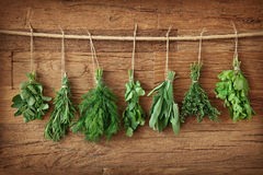 Fresh herbs Royalty Free Stock Photography