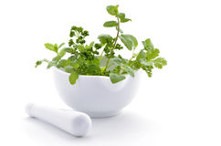 Fresh herbs. Fresh green herbs in white porcelain mortar and pestle on white background with room for copy royalty free stock photos