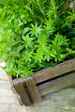 Fresh herbs. In a wooden box Stock Images