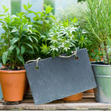 Fresh herbs. Several garden herbs and slate Royalty Free Stock Photography