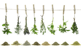 Fresh herbs. Hanging on a rope Royalty Free Stock Photos